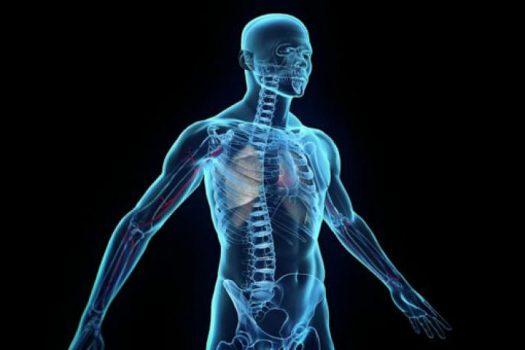 Ποιο σημείο του σώματος καθορίζει πόσα χρόνια θα ζήσουμε