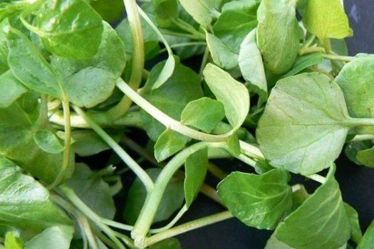 Νεροκάρδαμο: Ποιο το λαχανικό που ρίχνει πίεση, χοληστερίνη και προστατεύει από τον καρκίνο