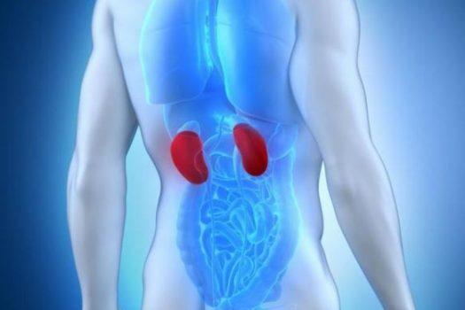 Καρκίνος του νεφρού: Ποια τα ύπουλα προειδοποιητικά σημάδια