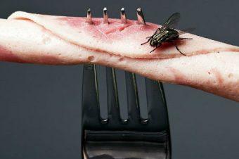 Προειδοποίηση από επιστήμονες: Αν μύγα ακουμπήσει το φαγητό θα πάθετε… Προσοχή