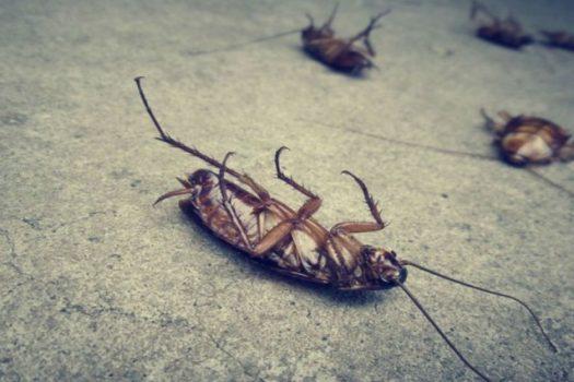 Κατσαρίδες και ζέστη: Ποιοι οι εύκολοι φυσικοί τρόποι για να τις εξαφανίσετε από το σπίτι